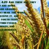 Mark 4:20 And these are they which are sown on good ground; such as hear the word, and receive it, and bring forth fruit, some thirtyfold, some sixty, and some an hundred.